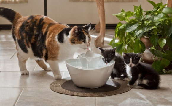 Cat Water Fountain Reviews